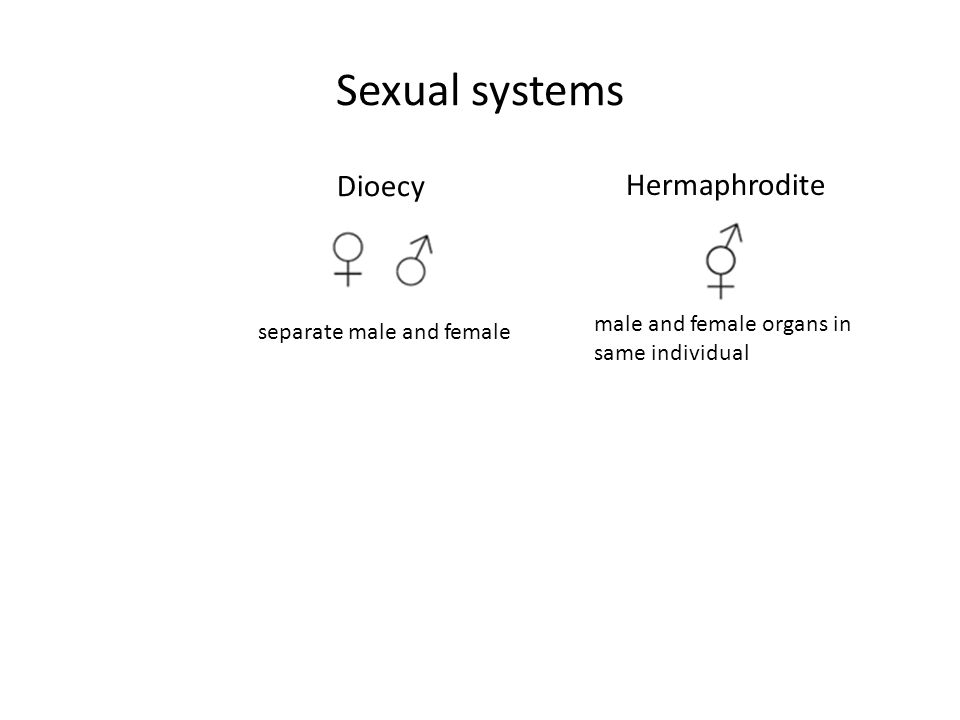 Sexual systems Dioecy Hermaphrodite male and female organs in same individual separate male and female