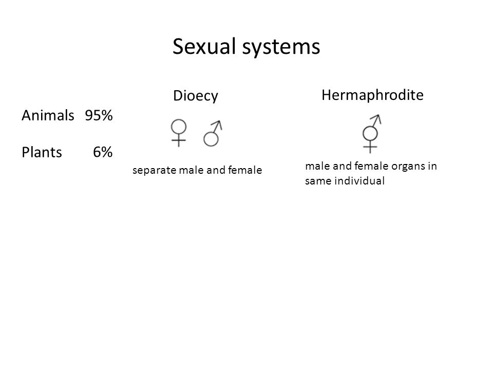 Sexual systems Dioecy Hermaphrodite male and female organs in same individual separate male and female 6% 95%Animals Plants