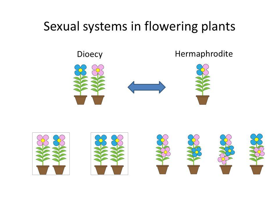 Sexual systems in flowering plants Dioecy Hermaphrodite