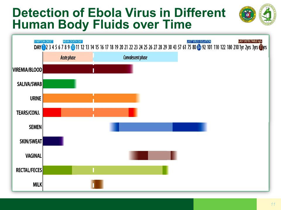 Detection of Ebola Virus in Different Human Body Fluids over Time 11