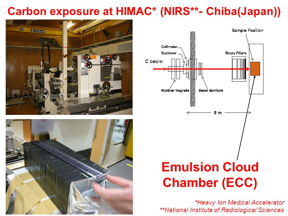 Carbon exposure at HIMAC* (NIRS**- Chiba(Japan)) Emulsion Cloud Chamber (ECC) *Heavy Ion Medical Accelerator **National Institute of Radiological Sciences
