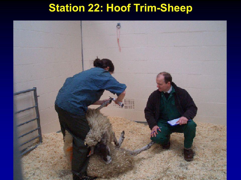 Station 22: Hoof Trim-Sheep