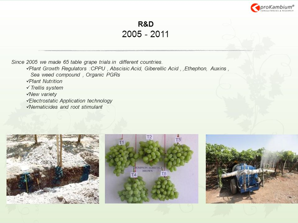 R&D 2005 - 2011 Since 2005 we made 65 table grape trials in different countries. Plant Growth Regulators :CPPU, Abscisic Acid, Giberellic Acid,,Etheph