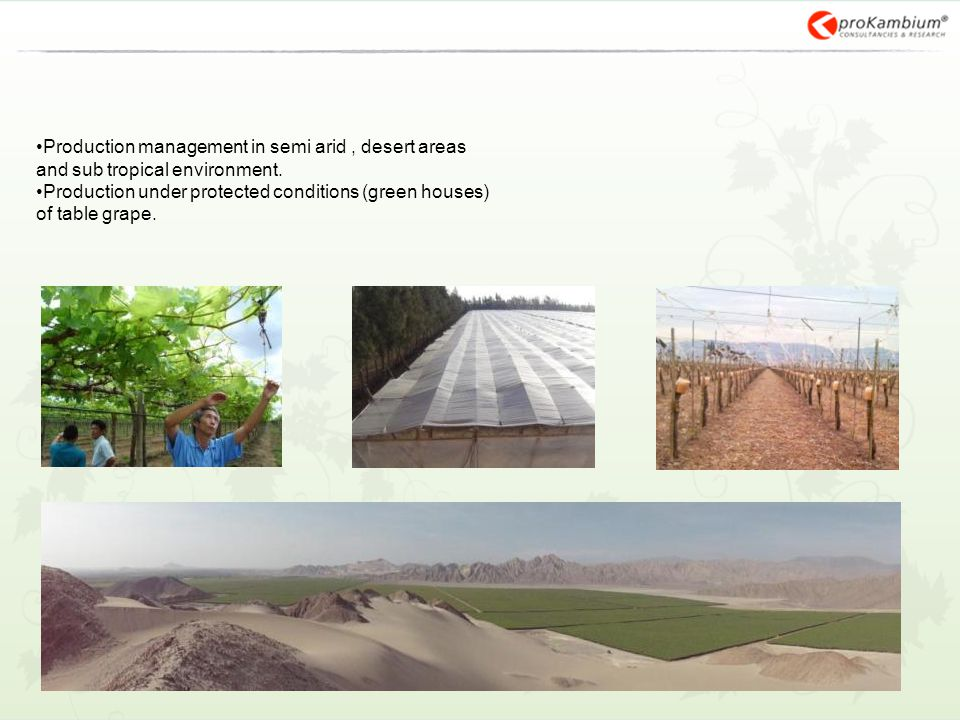 Production management in semi arid, desert areas and sub tropical environment. Production under protected conditions (green houses) of table grape.