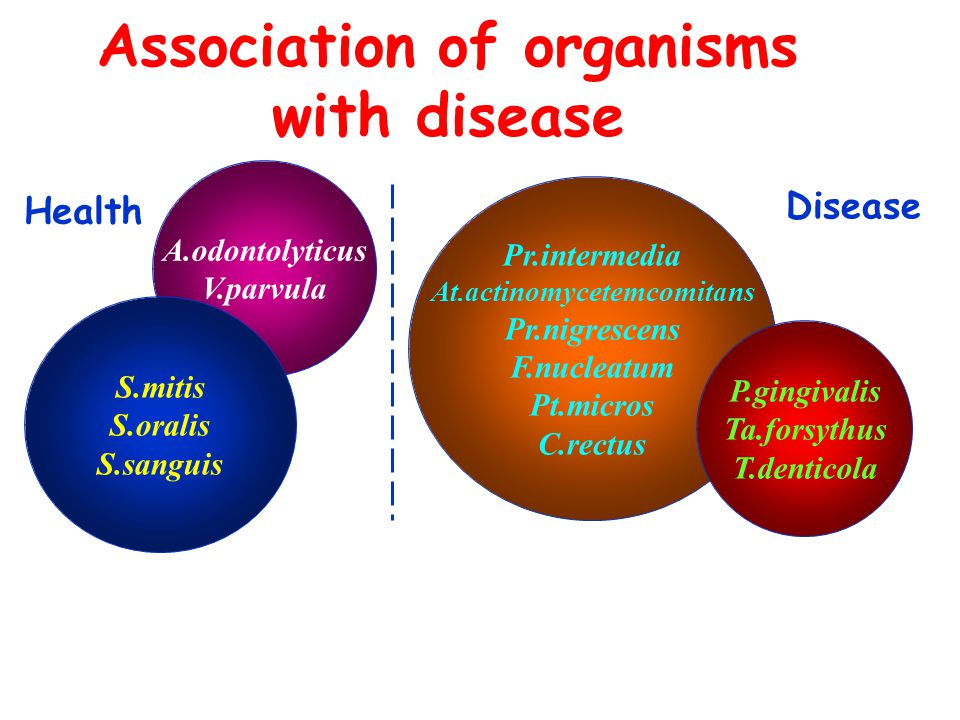 A.odontolyticus V.parvula Association of organisms with disease Pr.intermedia At.actinomycetemcomitans Pr.nigrescens F.nucleatum Pt.micros C.rectus P.gingivalis Ta.forsythus T.denticola S.mitis S.oralis S.sanguis Health Disease