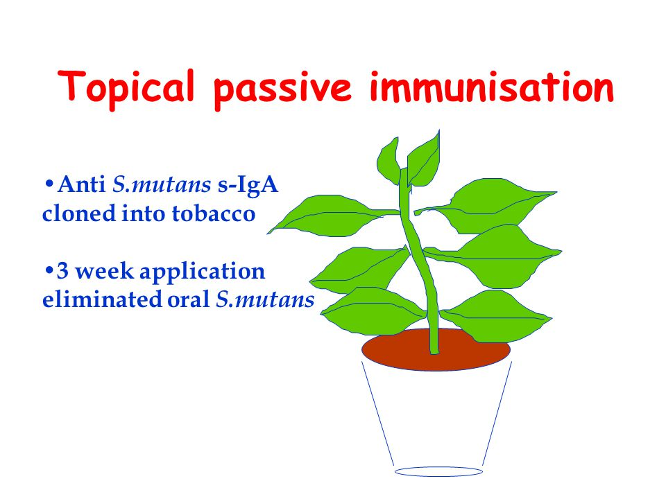 Topical passive immunisation Anti S.mutans s-IgA cloned into tobacco 3 week application eliminated oral S.mutans