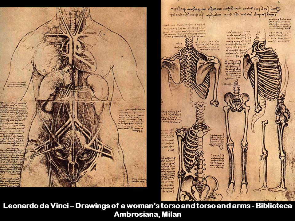 Leonardo da Vinci – Drawings of a woman's torso and torso and arms - Biblioteca Ambrosiana, Milan