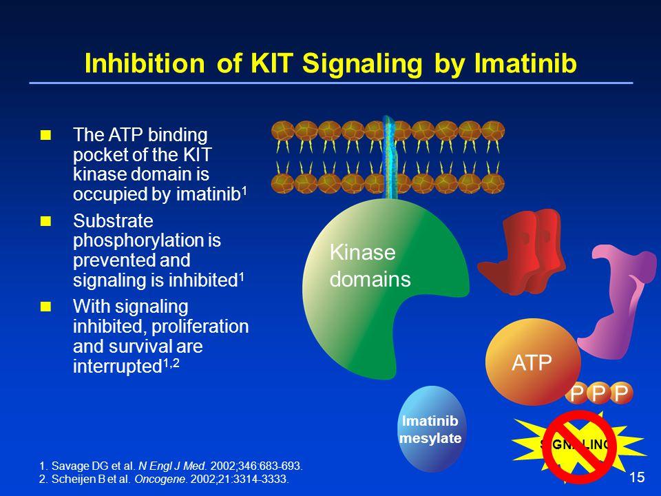 15 Inhibition of KIT Signaling by Imatinib P PPP ATP SIGNALING Imatinib mesylate Kinase domains 1. Savage DG et al. N Engl J Med. 2002;346:683-693. 2.