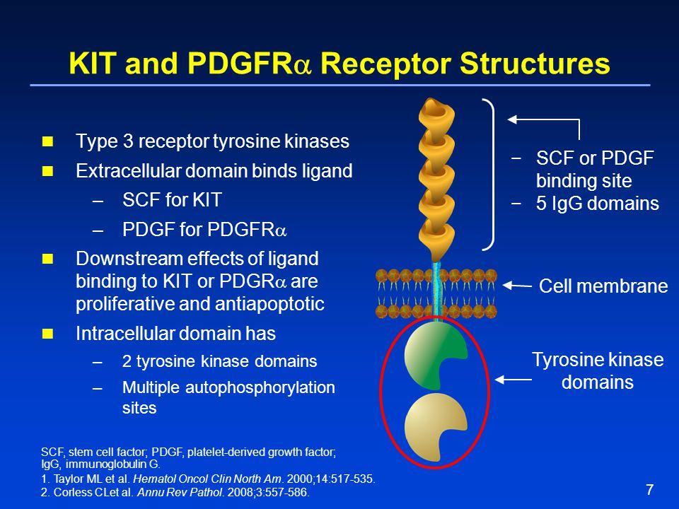 7 KIT and PDGFR  Receptor Structures Type 3 receptor tyrosine kinases Extracellular domain binds ligand –SCF for KIT –PDGF for PDGFR  Downstream eff