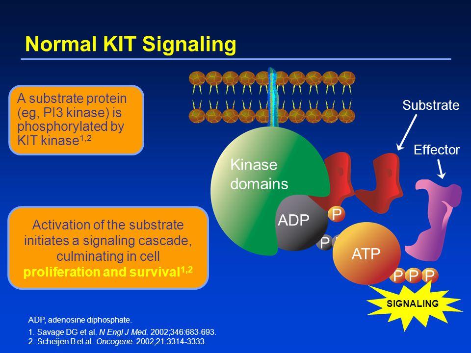 Normal KIT Signaling PPP ADP P P PPP ATP SIGNALING Kinase domains Substrate Effector ADP, adenosine diphosphate. 1. Savage DG et al. N Engl J Med. 200