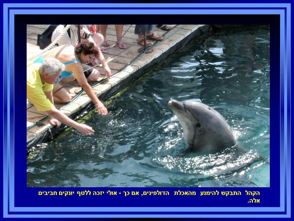 הקהל התבקש להימנע מהאכלת הדולפינים, אם כך - אולי יזכה ללטף יונקים חביבים אלה.