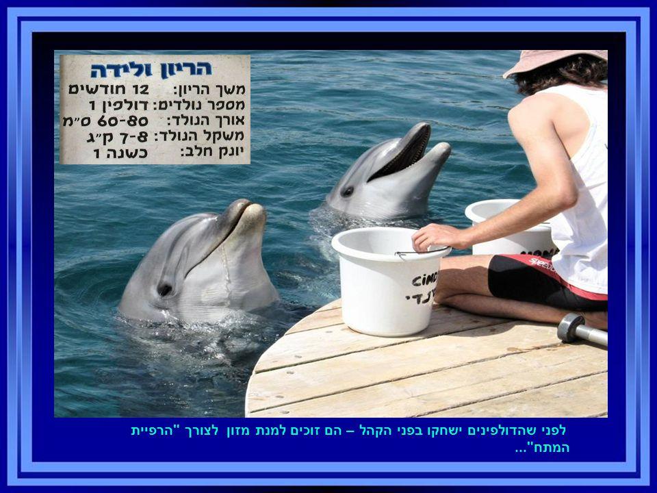 לפני שהדולפינים ישחקו בפני הקהל – הם זוכים למנת מזון לצורך הרפיית המתח ...