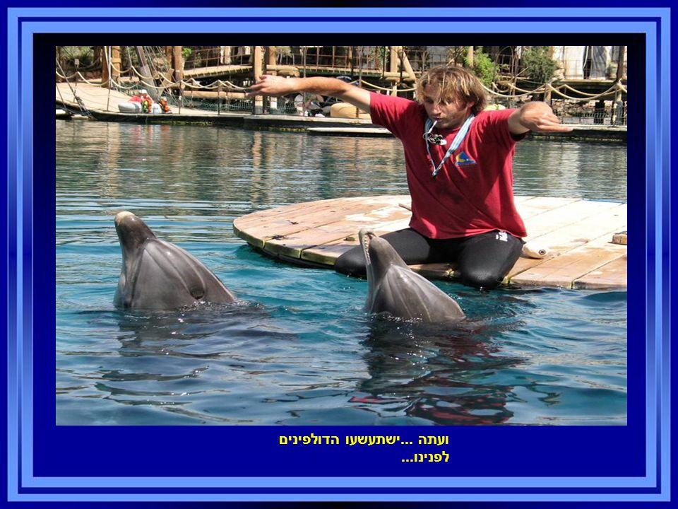 ועתה...ישתעשעו הדולפינים לפנינו...