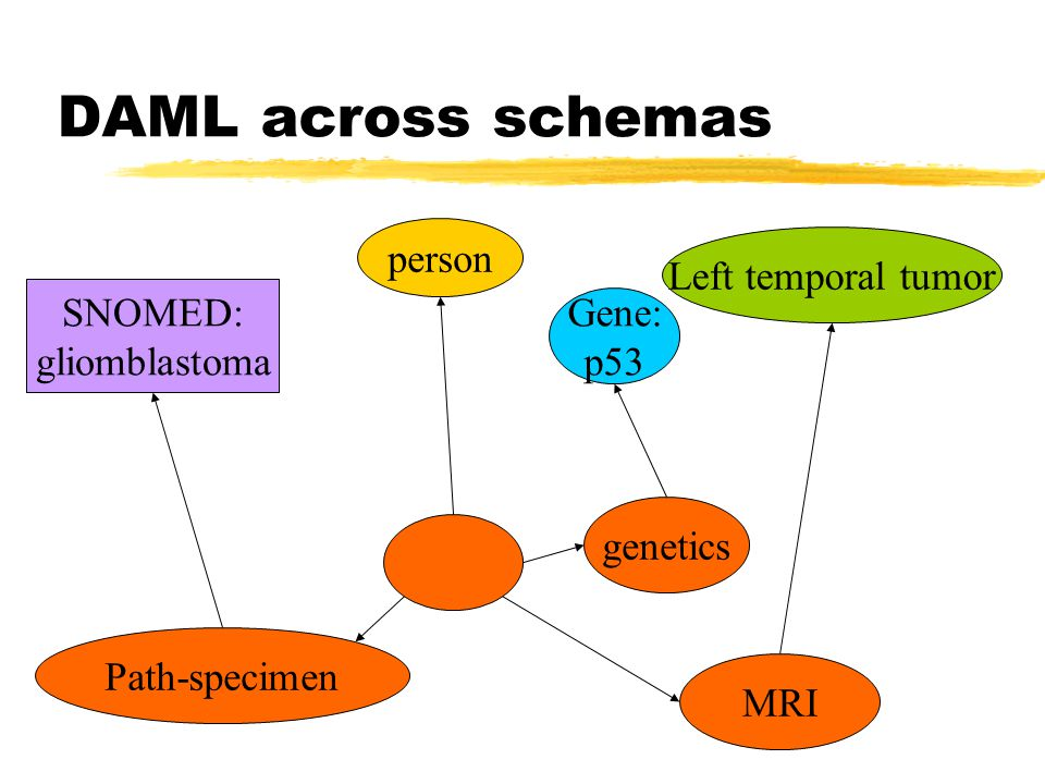 genetics MRI Path-specimen person Gene: p53 Left temporal tumor SNOMED: gliomblastoma DAML across schemas