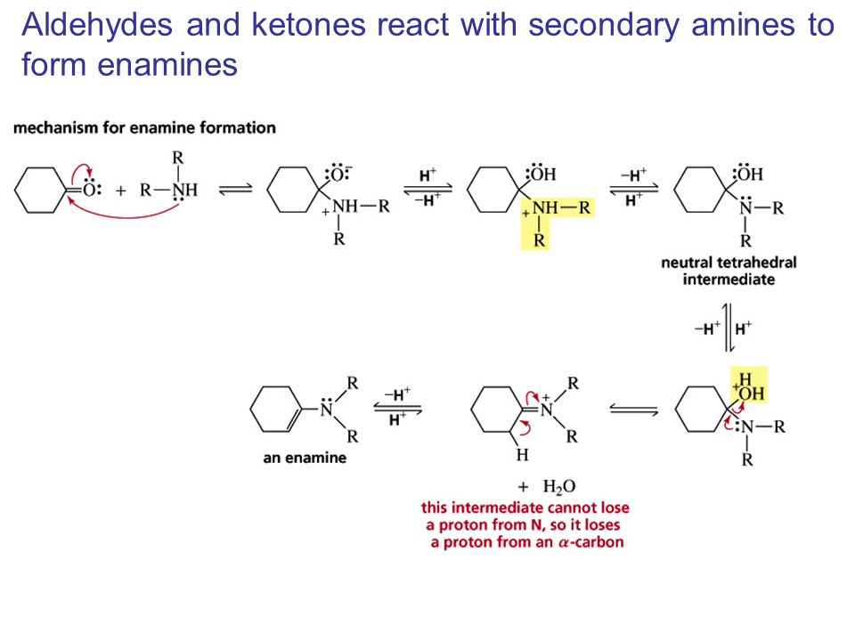 Aldehydes and ketones react with secondary amines to form enamines