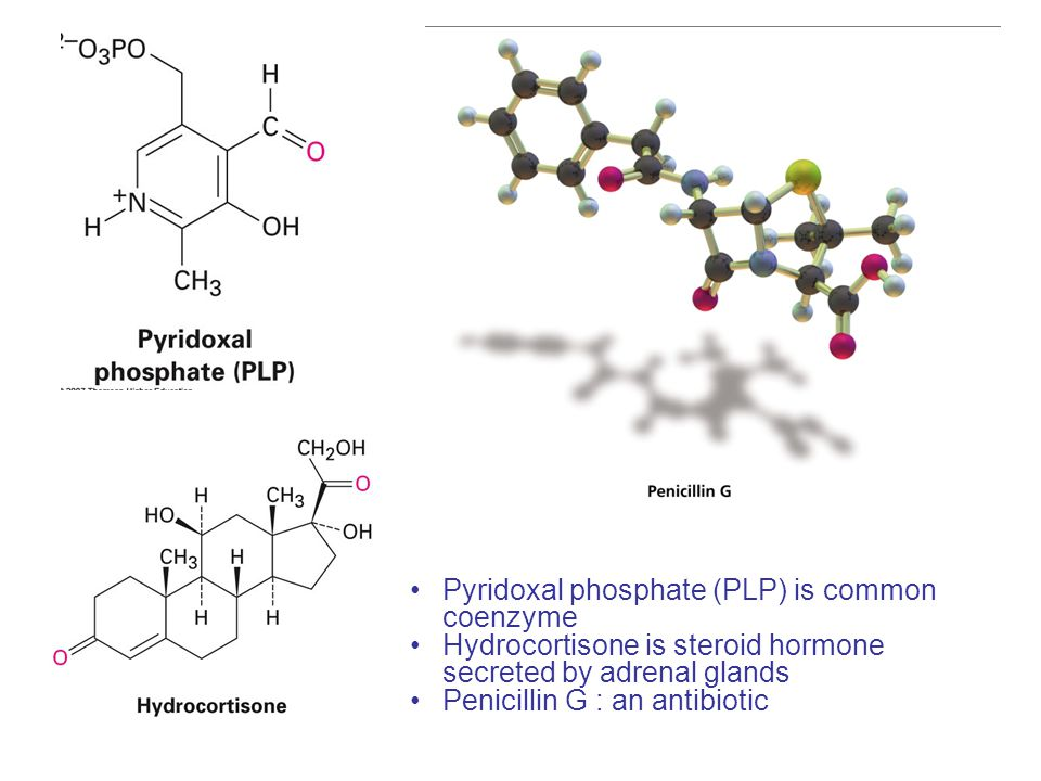 Pyridoxal phosphate (PLP) is common coenzyme Hydrocortisone is steroid hormone secreted by adrenal glands Penicillin G : an antibiotic