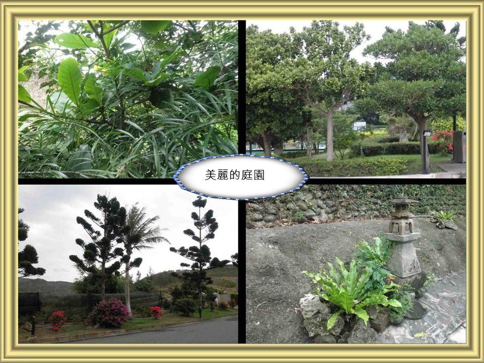 蒼綠的椰子樹,以及紅綠相間的花圃