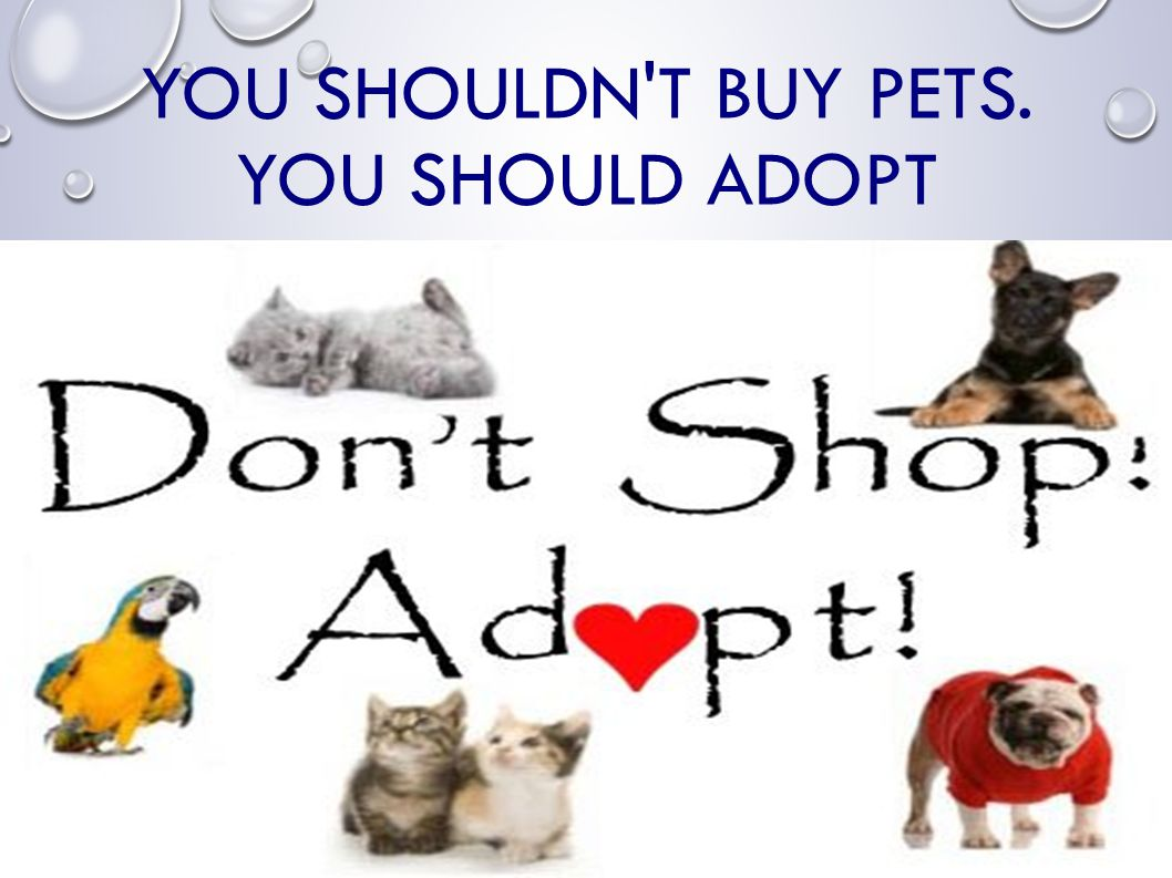 YOU SHOULDN T BUY PETS. YOU SHOULD ADOPT