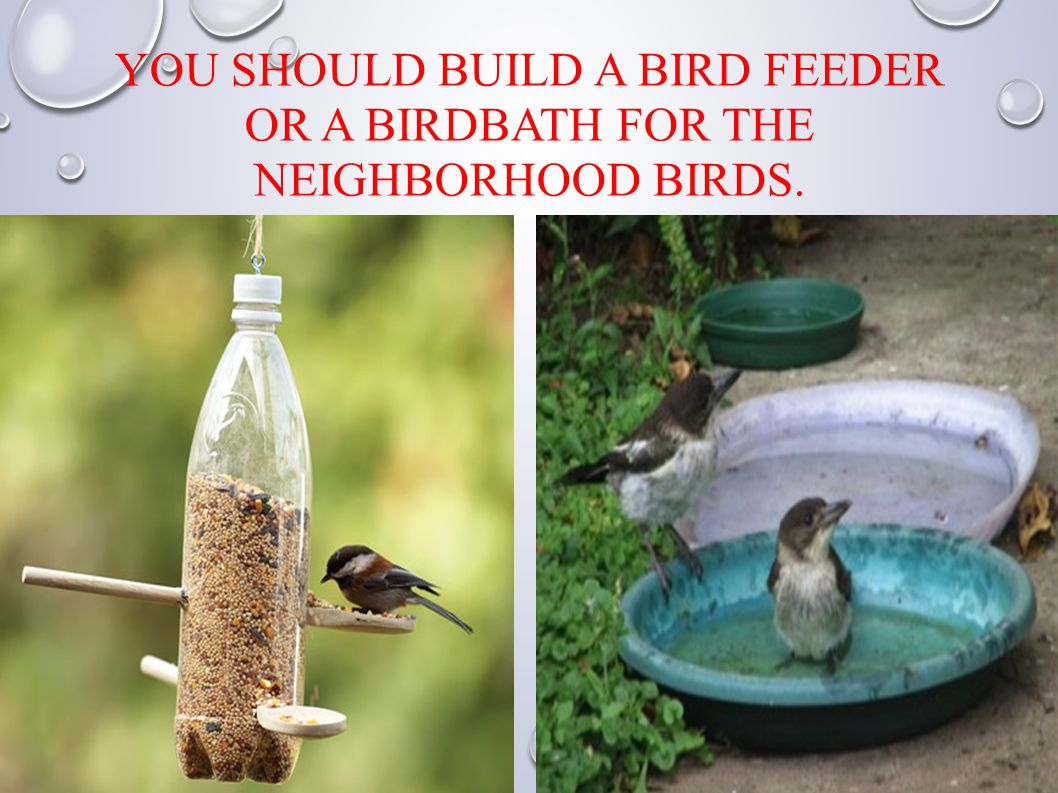 YOU SHOULD BUILD A BIRD FEEDER OR A BIRDBATH FOR THE NEIGHBORHOOD BIRDS.