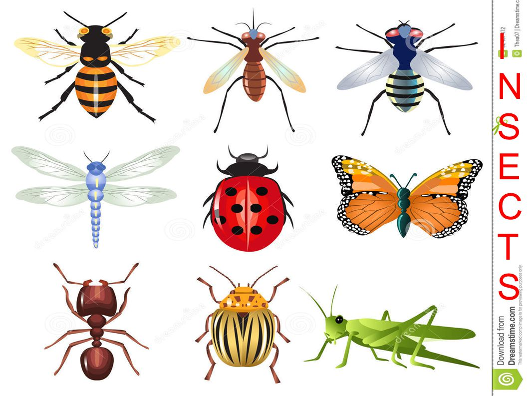 INSECTSINSECTS