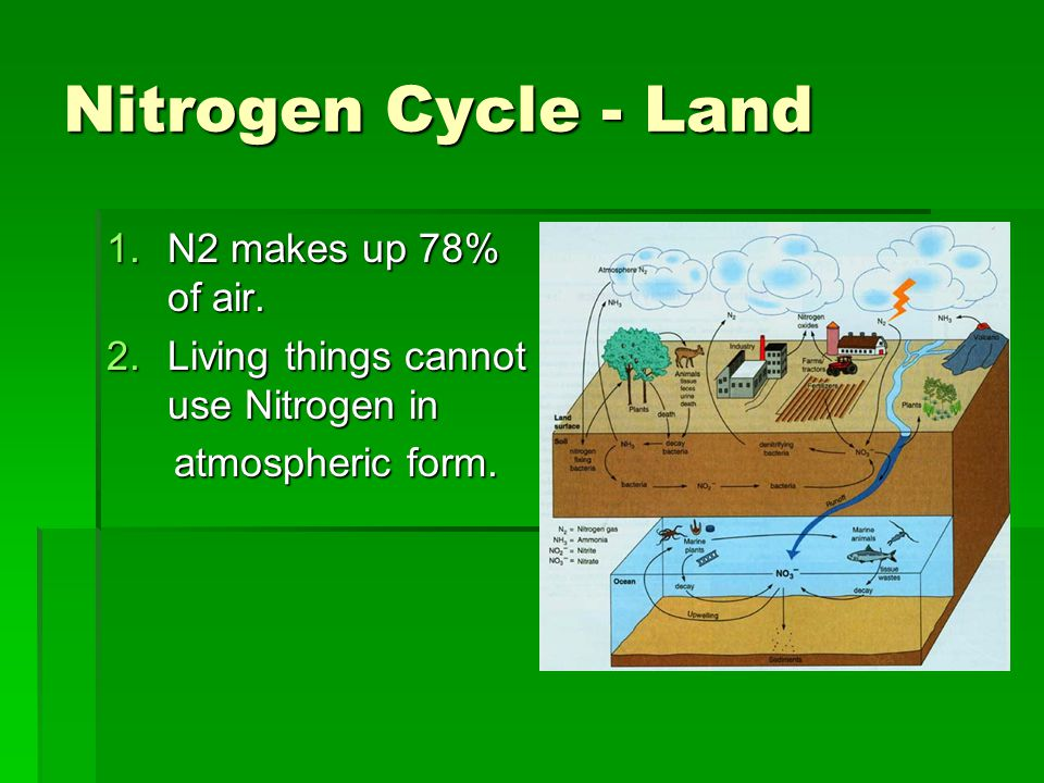 Nitrogen Cycle - Land 1.N2 makes up 78% of air. 2.Living things cannot use Nitrogen in atmospheric form. atmospheric form.