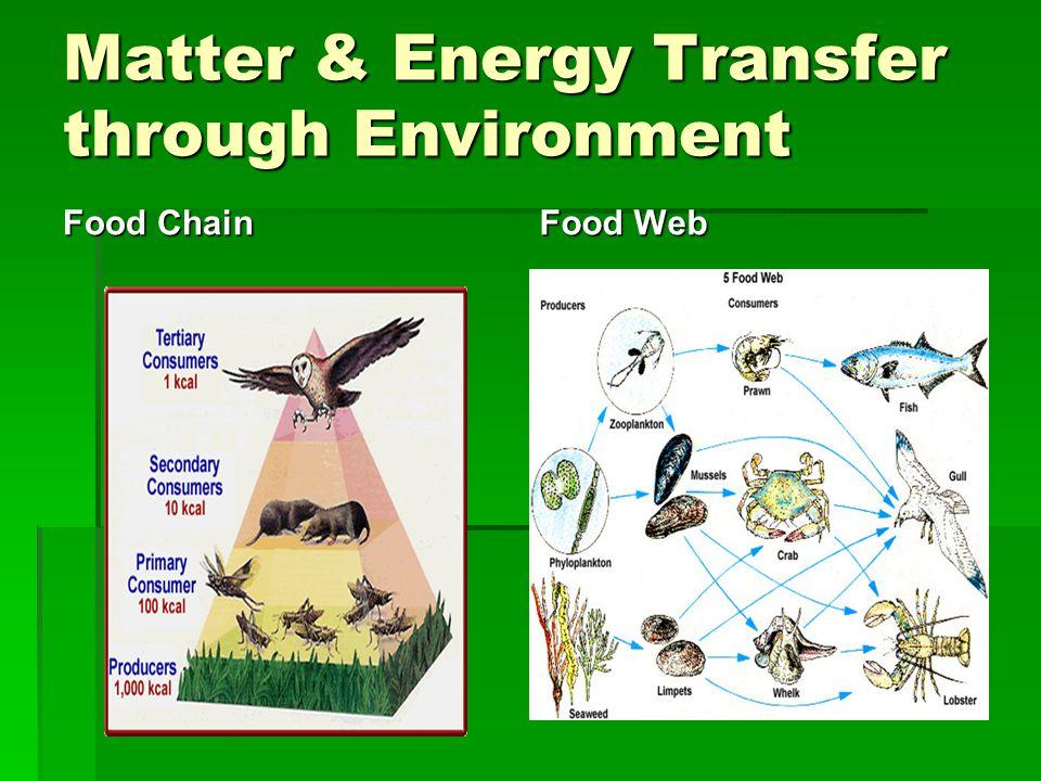Matter & Energy Transfer through Environment Food Chain Food Web