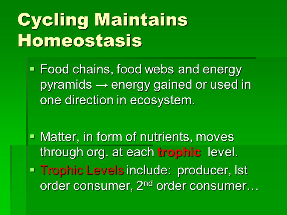 Cycling Maintains Homeostasis  Food chains, food webs and energy pyramids → energy gained or used in one direction in ecosystem.  Matter, in form of