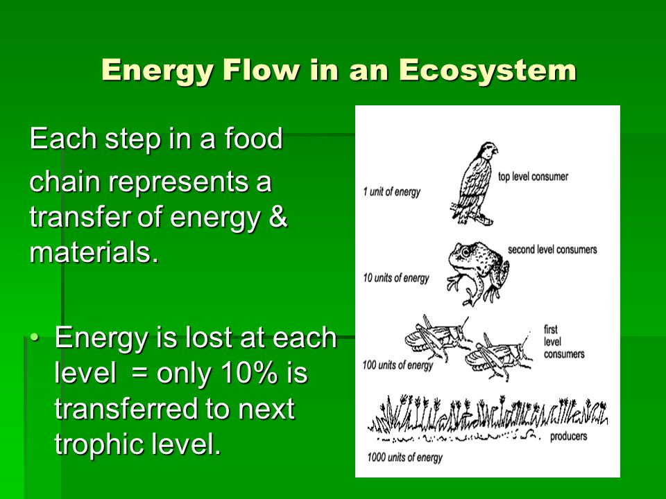 Energy Flow in an Ecosystem Each step in a food chain represents a transfer of energy & materials. Energy is lost at each level = only 10% is transfer