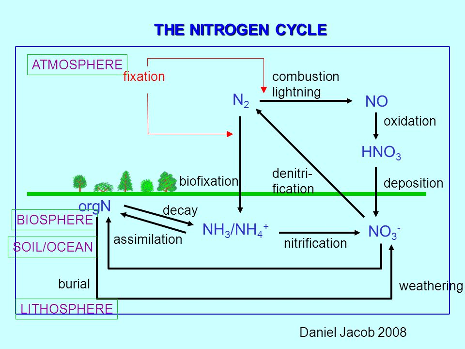 THE NITROGEN CYCLE ATMOSPHERE N2N2 NO HNO 3 NH 3 /NH 4 + NO 3 - orgN BIOSPHERE LITHOSPHERE combustion lightning oxidation deposition assimilation deca