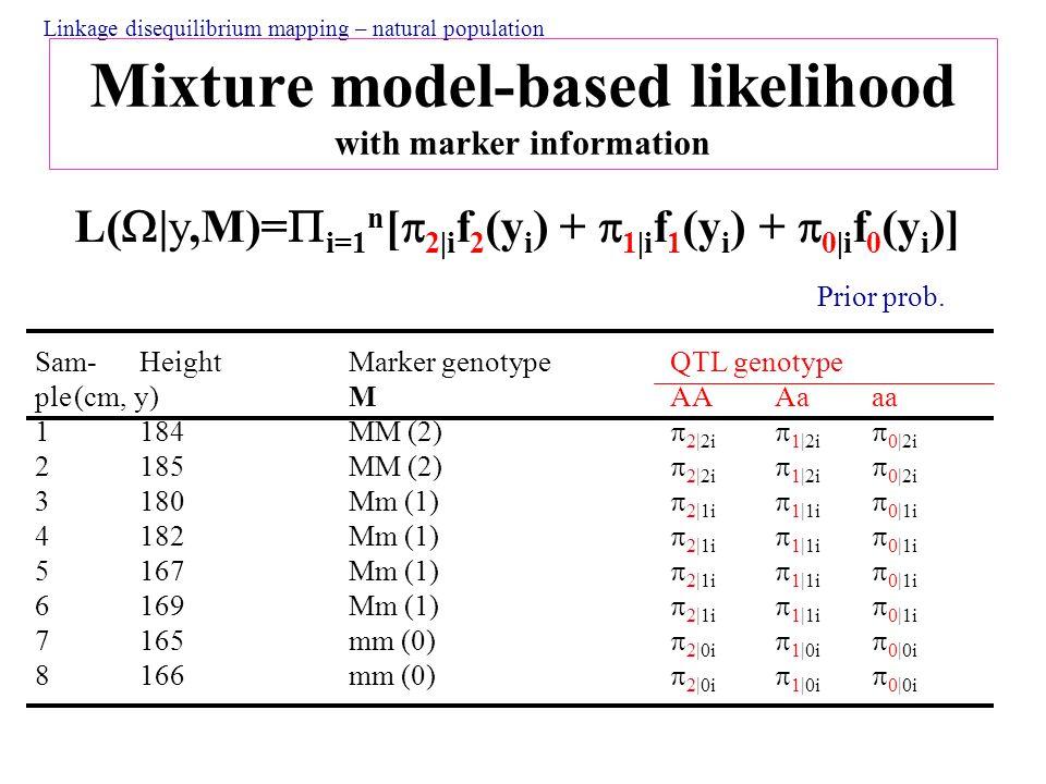 Mixture model-based likelihood with marker information L(  |y,M)=  i=1 n [  2|i f 2 (y i ) +  1|i f 1 (y i ) +  0|i f 0 (y i )] Sam- Height Marker genotype QTL genotype ple(cm, y) M AA Aaaa 1184MM (2)  2|2i  1|2i  0|2i 2185MM (2)  2|2i  1|2i  0|2i 3180Mm (1)  2|1i  1|1i  0|1i 4182Mm (1)  2|1i  1|1i  0|1i 5167Mm (1)  2|1i  1|1i  0|1i 6169Mm (1)  2|1i  1|1i  0|1i 7165mm (0)  2|0i  1|0i  0|0i 8166mm (0)  2|0i  1|0i  0|0i Prior prob.