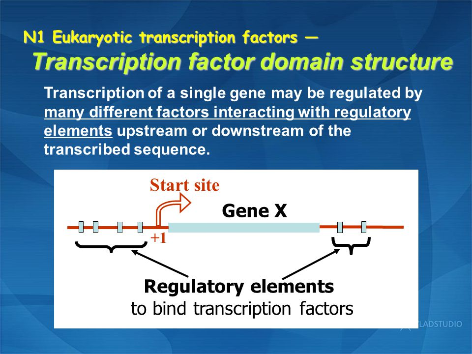 N1 Eukaryotic transcription factors — Repressor domains Repression of transcription may occur by indirect interference with the function of an activator.