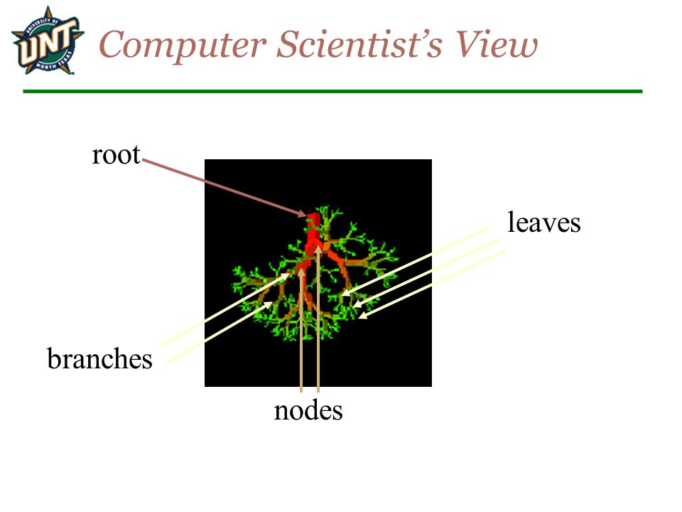 Computer Scientist's View branches leaves root nodes