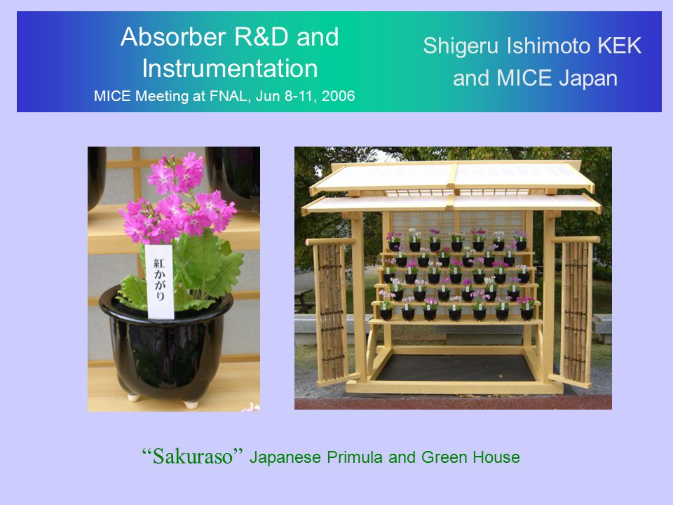"Absorber R&D and Instrumentation MICE Meeting at FNAL, Jun 8-11, 2006 Shigeru Ishimoto KEK and MICE Japan ""Sakuraso"" Japanese Primula and Green House"