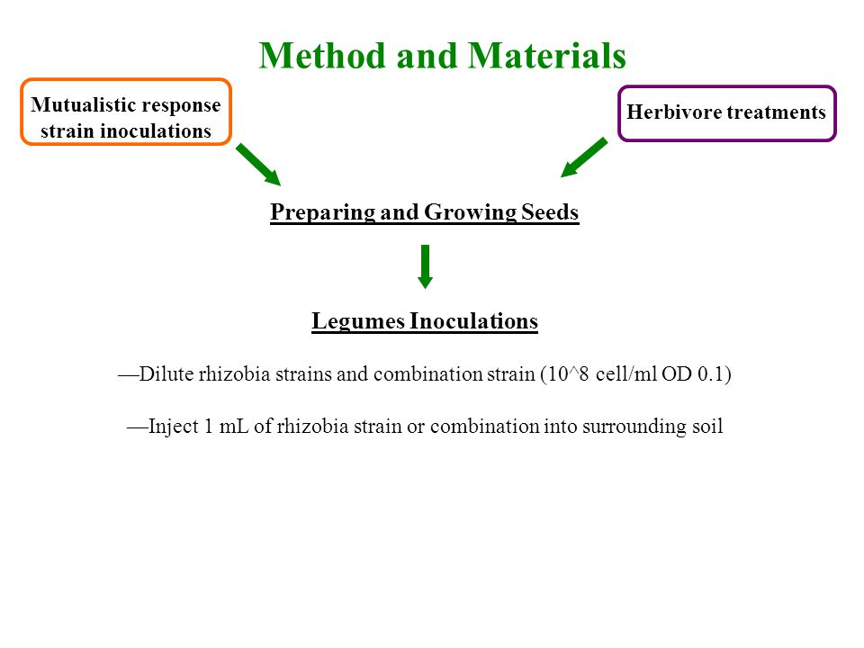 Preparing and Growing Seeds Legumes Inoculations —Dilute rhizobia strains and combination strain (10^8 cell/ml OD 0.1) —Inject 1 mL of rhizobia strain or combination into surrounding soil Mutualistic response strain inoculations Herbivore treatments Method and Materials