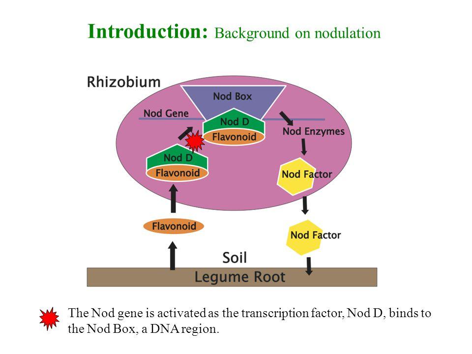 -Figures 7-10 show populations with nitrogen produced longer vine lengths.