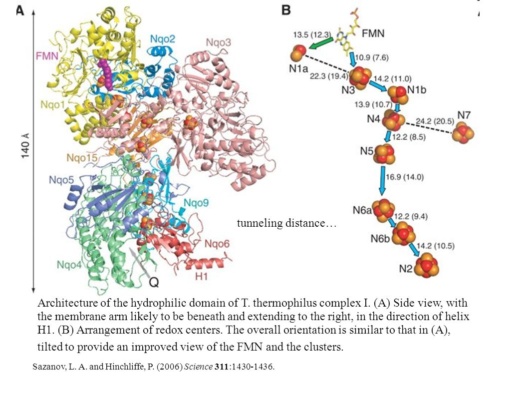 Architecture of the hydrophilic domain of T. thermophilus complex I.