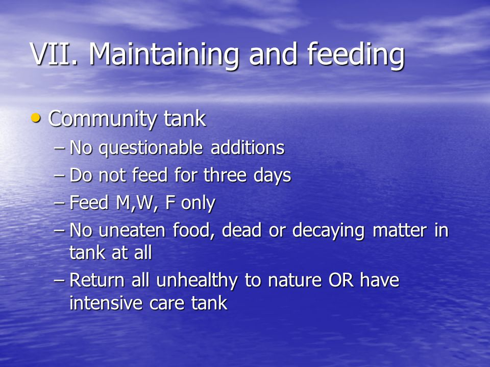 VII. Maintaining and feeding Community tank Community tank –No questionable additions –Do not feed for three days –Feed M,W, F only –No uneaten food,