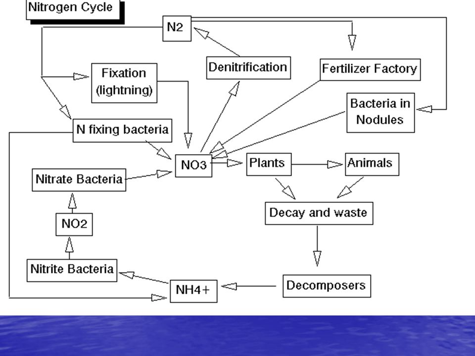 Nitrogen Pathways and Reactions: N2 to organic-N; called N-fixation (plants and humans) N2 to organic-N; called N-fixation (plants and humans) Organic-N to NH4+ ; mineralization (by bacteria and fungi) Organic-N to NH4+ ; mineralization (by bacteria and fungi) NH4+ to NO3-, producing NO2 and N2O; nitrification (by bacteria) NH4+ to NO3-, producing NO2 and N2O; nitrification (by bacteria) NO3- to N2, producing N2O ; denitrification (by bacteria) NO3- to N2, producing N2O ; denitrification (by bacteria) NO3- & NH4+ to organic-N; photosynthesis (uptake by plants) NO3- & NH4+ to organic-N; photosynthesis (uptake by plants)