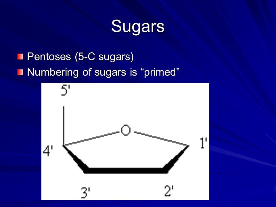 Sugars Pentoses (5-C sugars) Numbering of sugars is primed