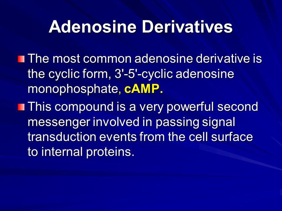 Adenosine Derivatives The most common adenosine derivative is the cyclic form, 3 -5 -cyclic adenosine monophosphate, cAMP.
