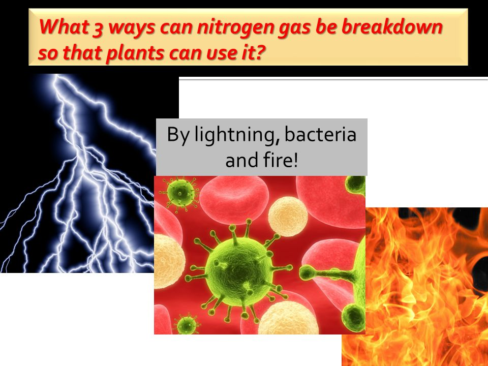 What 3 ways can nitrogen gas be breakdown so that plants can use it.