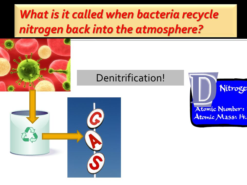 What is it called when bacteria recycle nitrogen back into the atmosphere Denitrification!