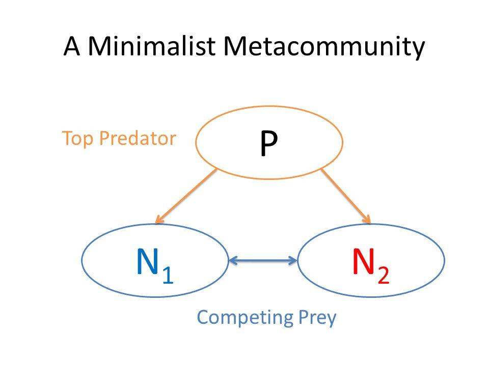 P N2N2 N1N1 Top Predator Competing Prey