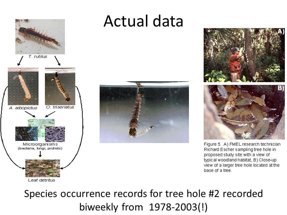 Actual data Species occurrence records for tree hole #2 recorded biweekly from 1978-2003(!)