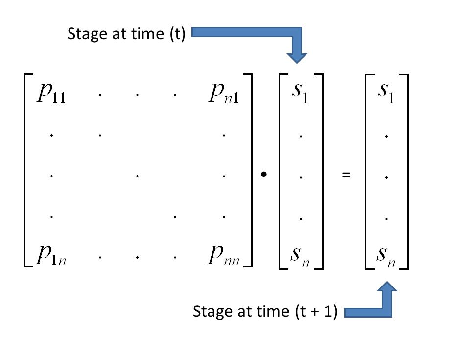 = Stage at time (t + 1) Stage at time (t)