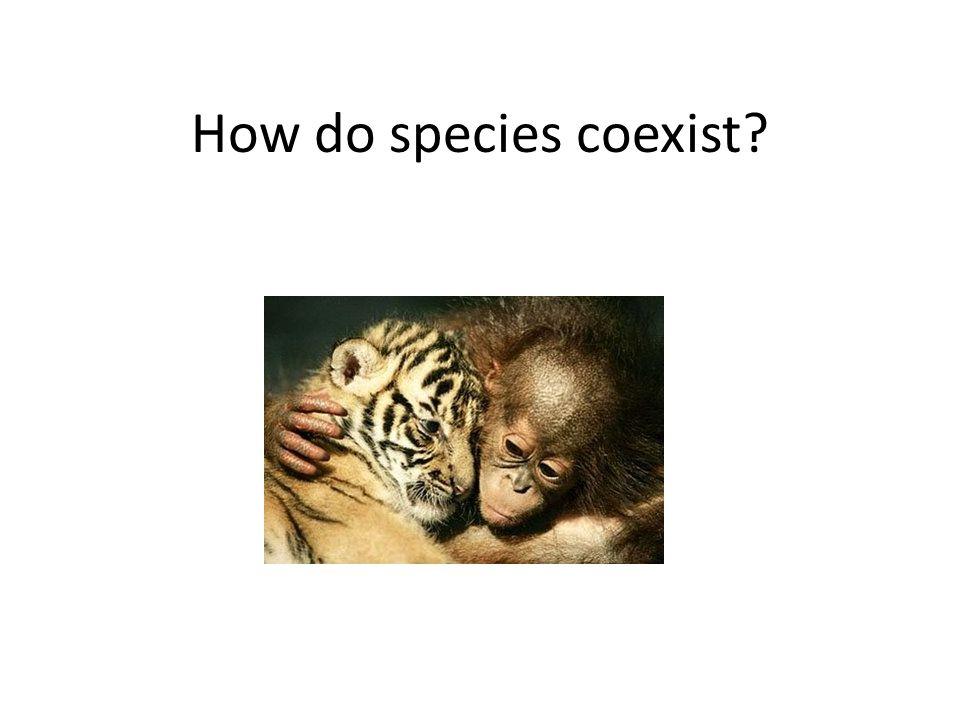 How do species coexist