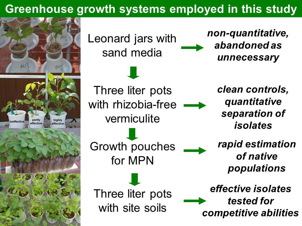 Greenhouse growth systems employed in this study Leonard jars with sand media Three liter pots with rhizobia-free vermiculite Growth pouches for MPN T