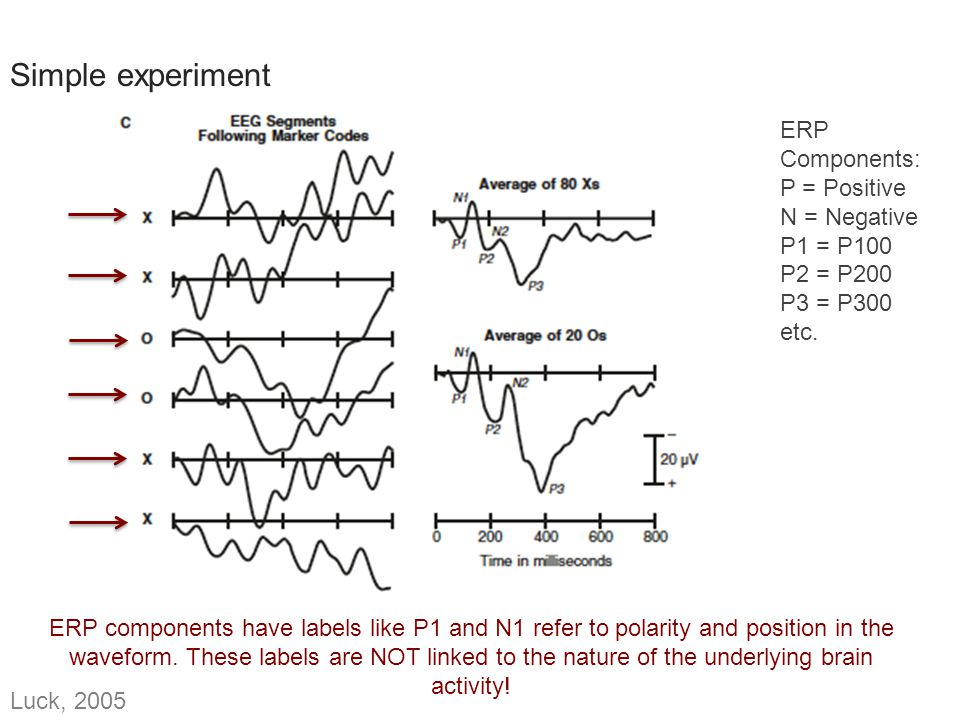 ERP Components – P1 P1: Sensory peak, elicited by visual stimuli no matter which task is used strongly influenced by stimulus parameters (luminance) Onset: 60-90 ms, peak:100-130ms Latency varies with contrast Early portion may come from middle occipital gyrus, late portion from fusiform gyrus Luck, 2005