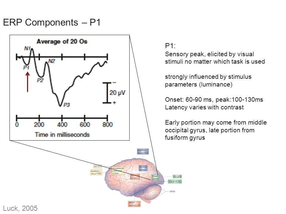 Which of the two, action potentials or postsynaptic potentials, do you think we see reflected in EEG.