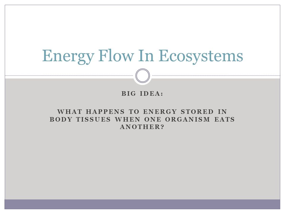 BIG IDEA: WHAT HAPPENS TO ENERGY STORED IN BODY TISSUES WHEN ONE ORGANISM EATS ANOTHER? Energy Flow In Ecosystems